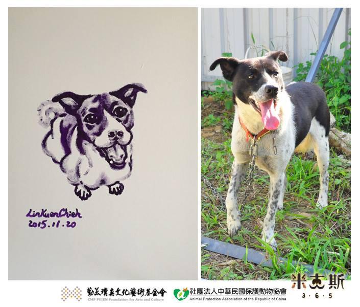 apa中华民国保护动物协会